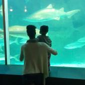 Observing sharks at the Tank